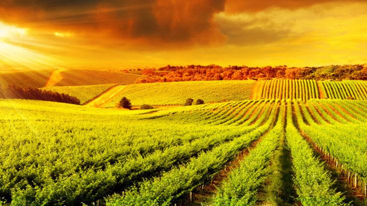 Nakliyat ve Tarım Ürünleri Sigortası