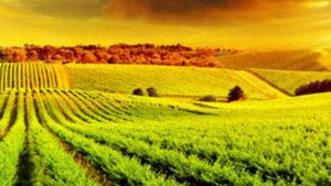 Tarsim Sigortası (Tarım ve Hayvancılık)