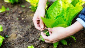 Tarım Sigortası Nedir?