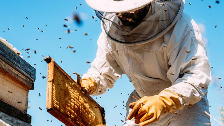 Arıcılık (Arı Kovanı) Sigortası